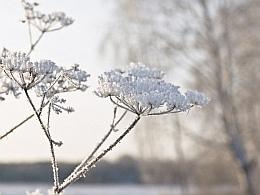 Зимнее волшебство